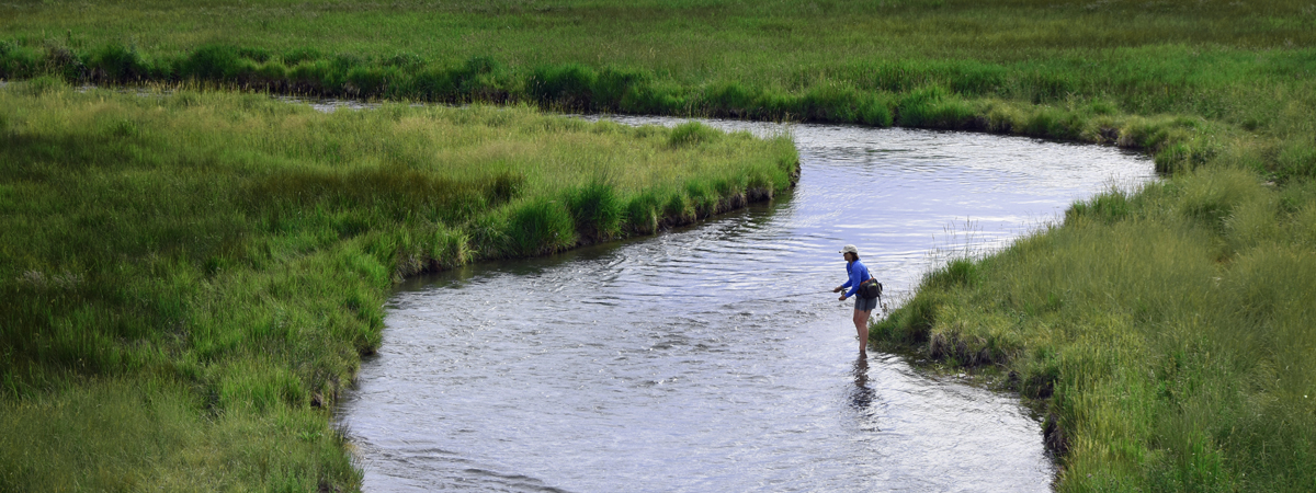 Fly Fishing Poindexter Slough in Montana near Dillon