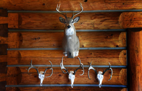 Deer Mounts at the Silver Bow Club Montana