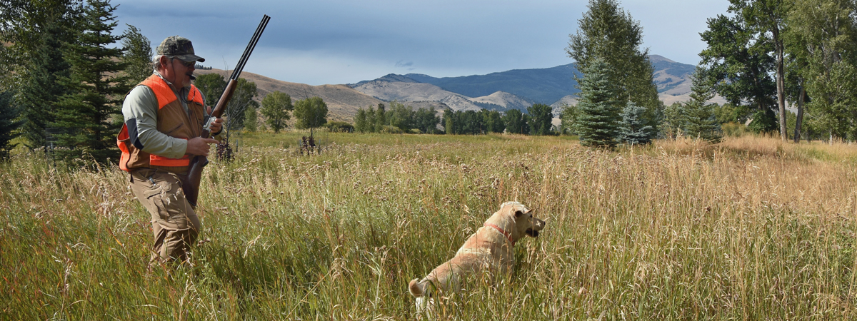 Pheasant Hunting with a Lab at the Silver Bow Club in Montana