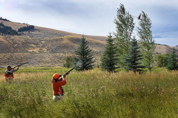 Montana Pheasant Hunts at all-inclusive Luxury Ranch