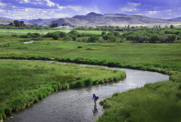 Fly fishing in montana on the big hole river at the silver for Beaverhead river fly fishing