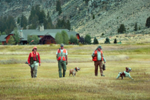 Pheasant hunts at the Silver Bow Club in Montana