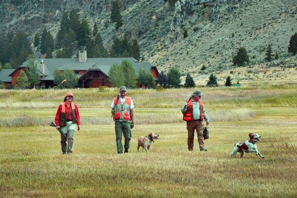 Hunting Pheasants at a Luxury Montana Resorts