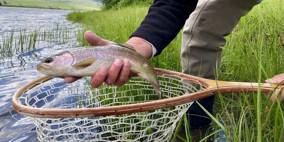 Netting a rainbow trout in the Big Hole River
