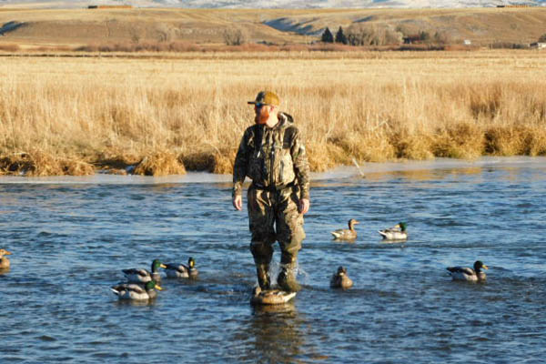 Setting duck decoys on the Beaverhead River in Montana for duck hunting